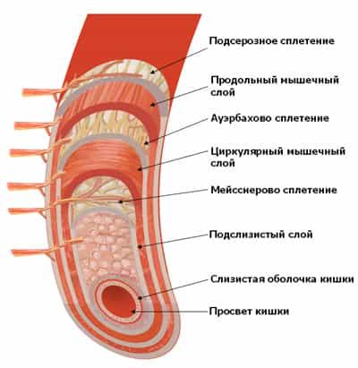 аллергия гельминты симптомы